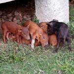 ...die wilden Schweine unter dem Bungalow