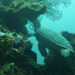 The Reef Marina Foto