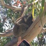 Wildlife Tours Australia Foto