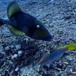 Photo de Manta Dive