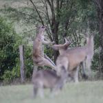 Willow Tree Estate Foto