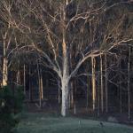 Foto de Willow Tree Estate