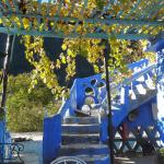 prachtige trap en druiven boven terras