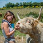 Fun with the Highland Cows