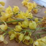 Orchids being packed for shipping