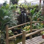 Waterfall & bridge amongst the orchid varieties