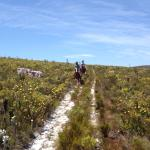 Horse riding in the reserve