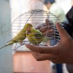 New Patients arriving at Charity Bird Hospital
