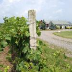 The Tasting Room at Long Cliff Vineyard & Winery Inc., is open year-round!