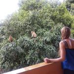 Photo de Kandy View Hotel