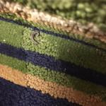 Bugs in carpet