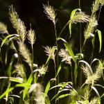 Grass Seefs