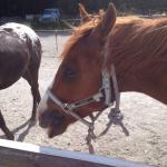 Photo de High Country Horses