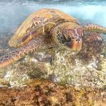 Turtle closeup
