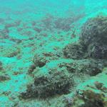 Foto de PV Sea Dive