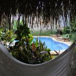 Hammock view of pool