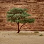 Acacia tree outside our camping spot