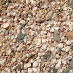 Shell beach....made up of shells.