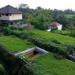 Ubud Green Photo