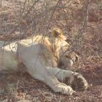 Durante um dos safaris