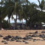 Campground on beach
