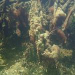 Kayak y snorkel tour