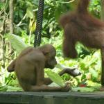 Photo de Sepilok Jungle Resort
