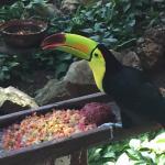Iberostar Quetzal Playacar Photo