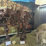 Museo Paleontologico y Arqueologico