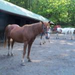 The horses at the stables seemed to want to go on that trail ride as bad as me