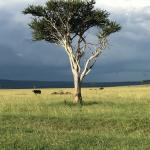 Landscape - andBeyond Kichwa Tembo Tented Camp Photo
