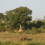 Sirheni Bush Camp Foto