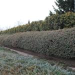 Зимний узор на кустах в парке