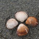 Foto de Playa de Malapesquera