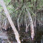 Everglades Rentals & Eco Adventures Foto