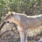 Wild Wings Safaris Foto