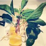Pho Herb set up, Beef Vermicelli  Noodle Bowl