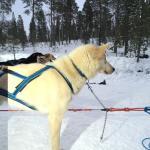 Inari Saariselka