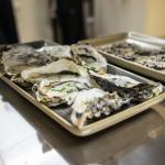 Fresh Bluff Oysters
