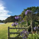 Photo of Pawhaoa Bay Lodge