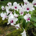 Orchid garden of Qingxiu Mountain