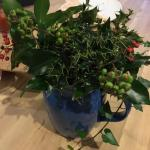 we foraged for Christmas decorations