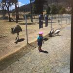 Tasmania Zoo Foto