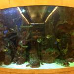 lobby fishtank