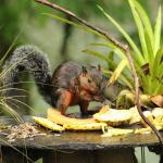Tierbeobachtung beim Frühstück