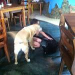 Restaurante - mi hija disfrutando con los dos bellos perros del lugar