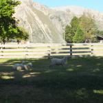 Foto de Flock Hill Lodge