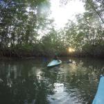 Los manglares con los kayaks de Cabinas Jimenez