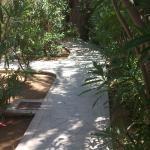 Garten und Weg
