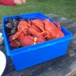 Lobsterlover99